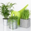 Beautiful plants and green watering can — Stock Photo