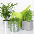 Stock Photo: Beautiful plants and green watering can