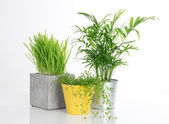 Three bright plants in pots — Stock Photo