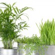 Beautiful green plants in pots — Stock Photo