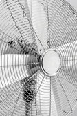 Close-up of metal electric fan — Stock Photo