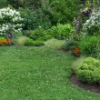 Summer garden with green lawn — Stock Photo