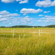 Scandinavian countryside in summer — Stock Photo