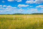 Rural escandinavo no verão — Foto Stock