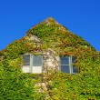 Facade of a house covered with ivy — Stock Photo