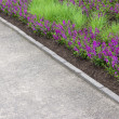 Purple flowers growing along the pathway — Stock Photo #32271525