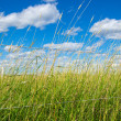 Green field on a farm under blue sky — Stock Photo