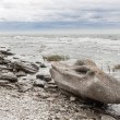 Rocky coastline of Gotland, Sweden — Stock Photo