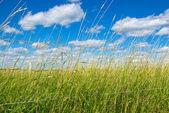 Zielone pole na farmie pod błękitne niebo — Zdjęcie stockowe