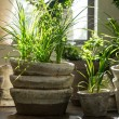 Green plants in old clay pots — Stock Photo