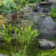 Garden decorated with stones and aquatic plants — Stock Photo