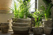 Green plants in old clay pots — Stockfoto
