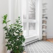 Lemon tree in a room with peaceful view — Stock Photo