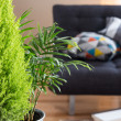 Green plants in the living room — Stock Photo