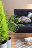 Green plants in the living room — Foto Stock