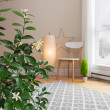 Blooming lemon tree in a room with modern decor — Stock Photo