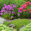 Garden with red and purple phlox — Stock Photo