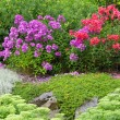 Stock Photo: Garden with red and purple phlox