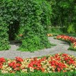 Ornamental garden with blooming begonias — Stock Photo