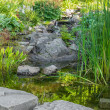 Garden with aquatic plants, pond and decorative stones — Stock Photo #36949213