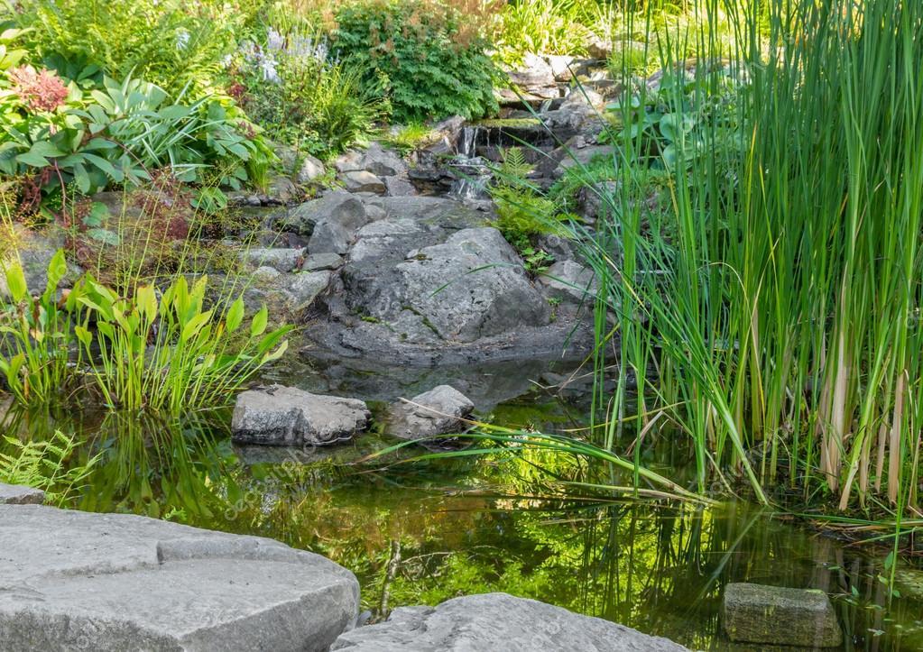 Jardin avec plantes aquatiques tang et pierres for Plantes decoratives jardin