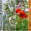 Winter, spring, summer, autumn. Four seasons. — Stock Photo