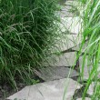 Stone path in the summer garden — Stock Photo