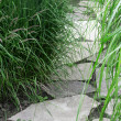 Stone path in the summer garden — Stockfoto