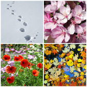 Four seasons. Winter, spring, summer, autumn. — Stock Photo