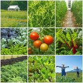 野菜の庭 — Stockfoto