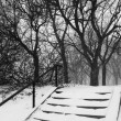 Park during snowstorm — Stock Photo #44151127