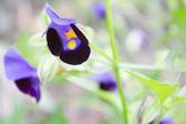 Paarse wilde bloemen — Stockfoto