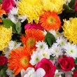 colorful flowers — Stock Photo #37499725