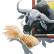 Stock Photo: Painted buffalo eat straw