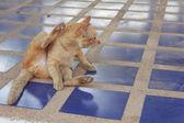 Cute little cat — Stock Photo
