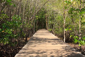 Passages in the mangrove forest — Stock Photo