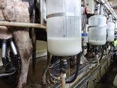 Cow milking equipment — Stock Photo