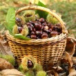Постер, плакат: Chestnuts in basket