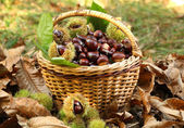 Chestnuts in basket — Stock Photo