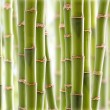 Royalty-Free Stock Photo: Bamboo Jungle