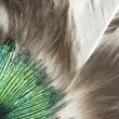 feathers closeup — Stock Photo