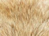 Fur macro — Stock Photo
