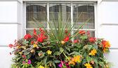 Flowers window — Stock Photo
