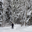 Forest snowshoeing - Stock Photo
