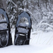 Stock Photo: Snow shoes in snow