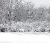 Winter city park — Stock Photo