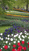 Keukenhof park — Stock Photo