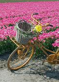 Riding a dream field — Stock Photo