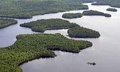 Havadan orman — Stok fotoğraf