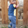 Child in pet zoo — Stock Photo